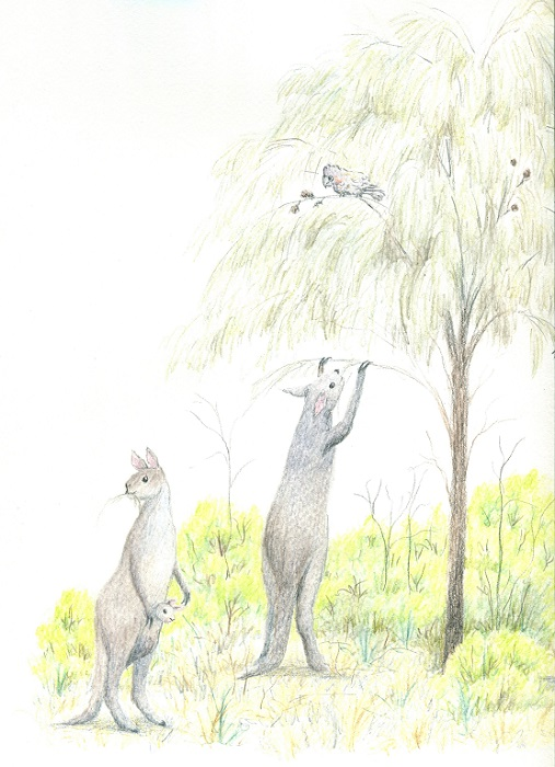 Artist's impression of the giant short-faced kangaroo, Procoptodon goliah, that lived in south-eastern Australia during the Pleistocene. Watercolour pencil on paper.